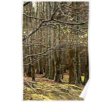 Forest branches Poster