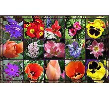 Glories of Spring Floral Collage in Mirrored Frame Photographic Print