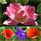 Dreamy Tulips Collage in Mirrored Frame by BlueMoonRose