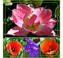 Dreamy Tulips Collage in Mirrored Frame Photographic Print