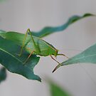 Mr Gum Leaf by bonso