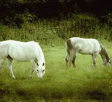 2 Beauties in the meadow ©  by Dawn M. Becker