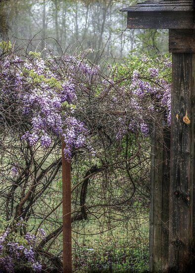 Morning Mist and Wisteria by Christine Annas