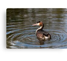 Great Crested Grebe 2. Canvas Print