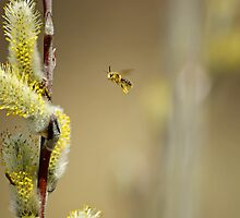 Busy Pollinators by Robin Clifton