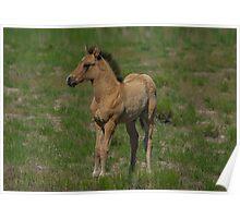 Beautiful Foal  Poster