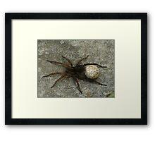 Momma Spider Framed Print