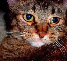 J' aime les chats...Baby Girl ©  by Dawn M. Becker