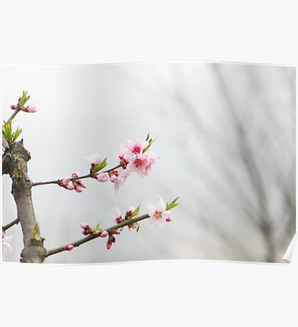 hello,spring Poster