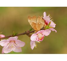 comma and peach Photographic Print