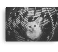 Basket cat Canvas Print
