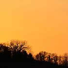 Trees in the Orange Sunset by Mully410
