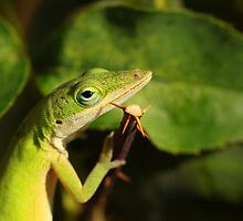 Green Anole Lizard Eating  by mhm710