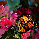 Monarch Butterfly Among Flower Blooms by Ron Deage