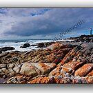 Eddystone LH Tasmania by Norman Winkworth