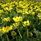 Buttercup Fields by Sharon Woerner