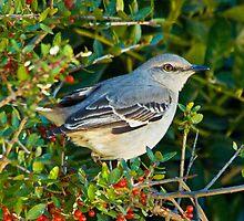 Bluebird in Foliage by Ron Deage