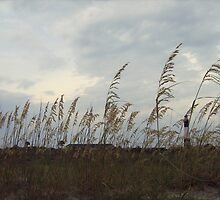 Tybee Island - Lighthouse through the Grass by emmacolleen