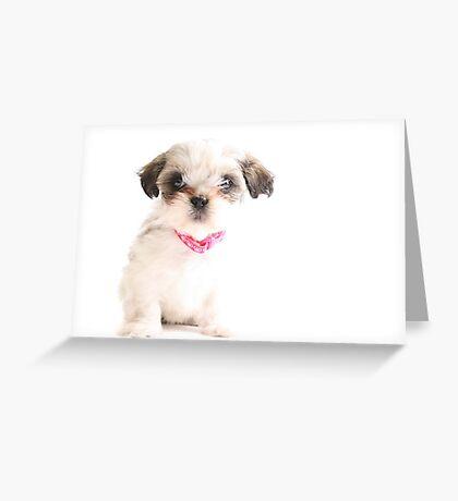 Baby Shih Tzu Greeting Card