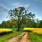 Canola Lane by Chelei