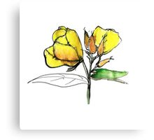 stylise quick watercolor sketch of Oenothera Canvas Print