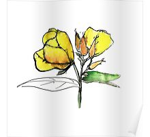 stylise quick watercolor sketch of Oenothera Poster
