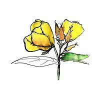 stylise quick watercolor sketch of Oenothera Photographic Print