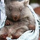 wombat bedtime by mooksool