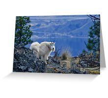 Mountain Goats Watching Us Greeting Card