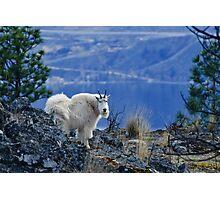 Mountain Goats Watching Us Photographic Print