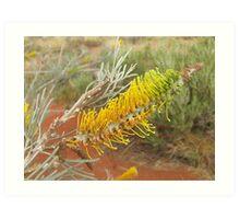 Bush Wattle Art Print