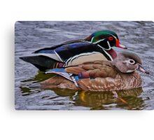 Mr & Mrs Wood Duck Canvas Print