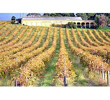 Adelaide Winery Photographic Print
