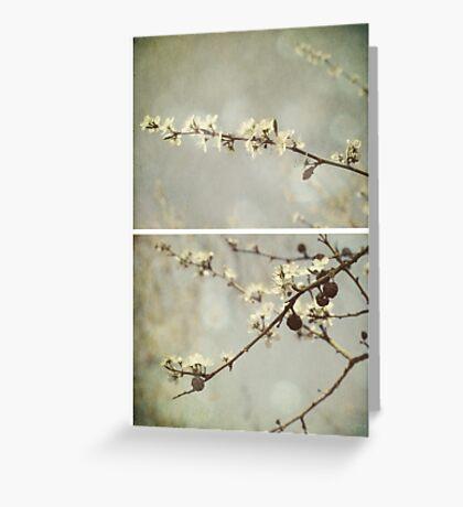 Spring - Hawthorn Greeting Card