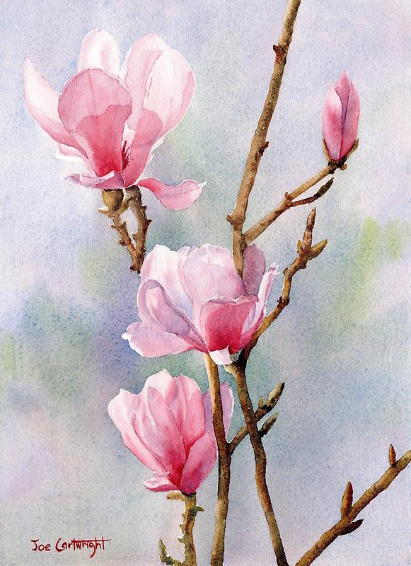 Pink Magnolias by Joe Cartwright