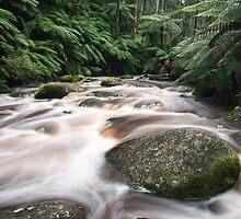 Toorongo Flow I by Sean Farrow