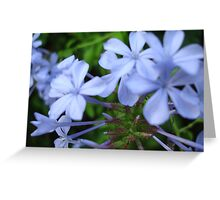 Wysteria Lane Greeting Card