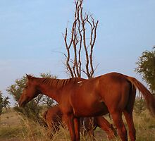 Bush Work Horse by Caine Mazoudier