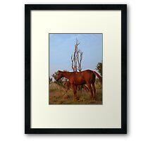 Bush Work Horse Framed Print