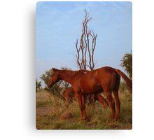 Bush Work Horse Canvas Print
