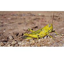 Lemon Hopper Photographic Print