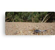 Sapphire Dragonfly Canvas Print