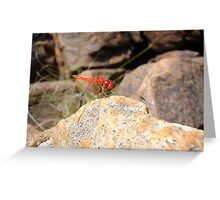 Ruby Dragonfly Greeting Card