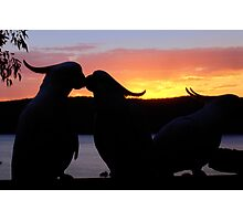 Love Sunset Photographic Print