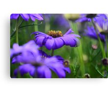 purple flower 3 Canvas Print