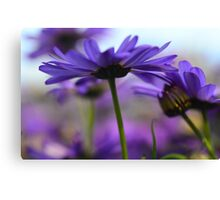 purple flower 4 Canvas Print