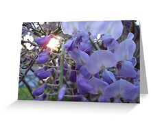 Wysteria Sunset Greeting Card