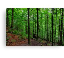 Wood at Jochberg. Germany. Canvas Print
