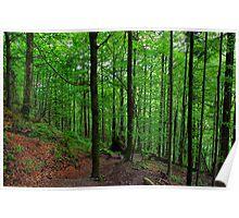 Wood at Jochberg. Germany. Poster