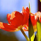 Bowls of sunshine by LadyFi